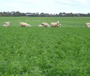 EverGraze livestock and pasture systems increased gross margins by more than 50%