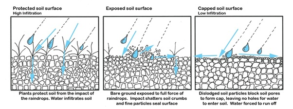 "Figure 1 – action of ground cover in protecting soil from raindrop impact (redrawn from ""Ground cover standards for Central Queensland Grazing Lands"", Fitzroy Basin Association)"