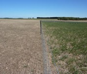 Including lucerne (right) in the system compared to perennial ryegrass (left) reduced supplementary feeding costs