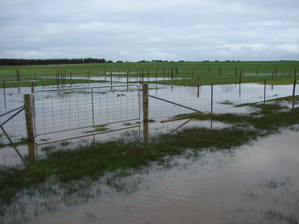 Summer active tall fescue was under water on the Hamilton EverGraze Proof Site for up to seven days (17 July 2007).