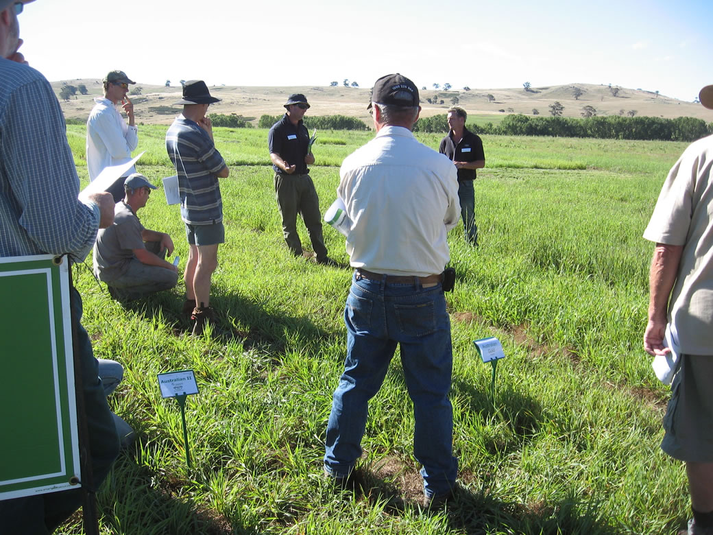 Local producers inspect the pasture variety experiment located adjacent to the phalaris paddock (January 2011).