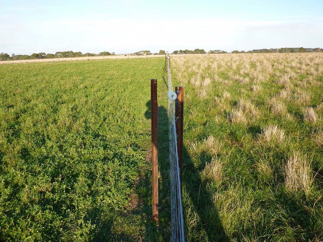 Lucerne (left) and early season flowering perennial ryegrass (right) 8th April 2011, seven years after sowing