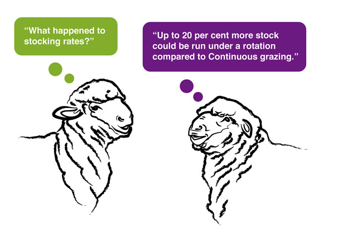 Sheep quote 2a