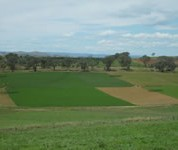 Flexibility in livestock systems is important for risk management in variable climates