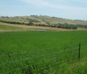 Right plant, right place and sustainable grazing management leads to persistent pastures