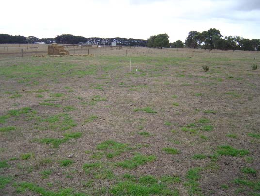 Kikuyu (Whittet) at Hamilton EverGraze Proof Site, April 2009.