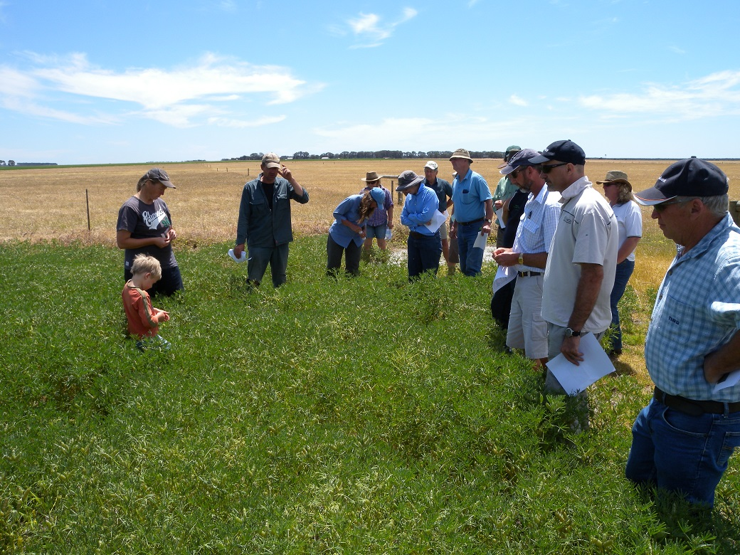 Albany EverGraze Regional Group and research team inspect the perennials
