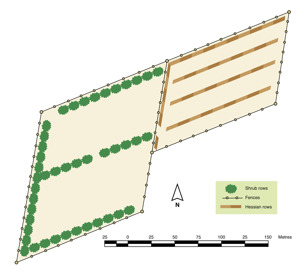 Figure 3. Layout of shrub belt and hedgerow shelter.