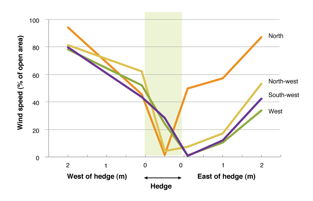 Figure 4. Wind speed at various distances from the hedge, in relation to wind direction at Hamilton during September 2006