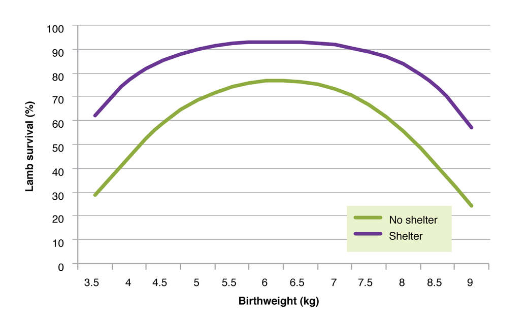 Figure 7. The relationship between birth weight and the survival of lambs born in sheltered areas or areas without shelter. This includes both Merino and Coopworth dams and all birth types (singles, twins and triplets).