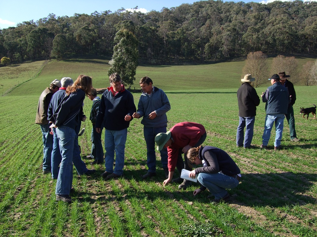 Tallangatta Valley EverGraze Supporting Site group, Northeast Victoria