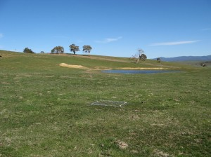 Rotational grazing improved ground cover in tough seasons at Ian Nicholas' Benambra Supporting Site.