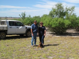 Barry and Genie Pearce have a property at Woogenellup, 70 kms north of Albany in WA. They host an EverGraze Supporting Site which is looking at perennials to address salinity and waterlogging whilst also increasing summer forage production.