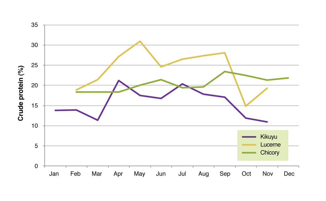 Figure 7. Crude protein (%) of kikuyu, lucerne and chicory averaged over 2006 to 2008 at the Proof Site in Wellstead.