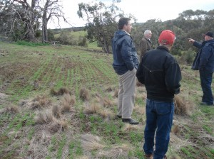 Used grazing management and establishment of Uplands cocksfoot to manage the serrated tussock on his steep gorges in Ballan.