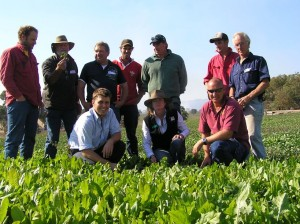 "Shane Arnold (front right) with participants at the Cavendish EverGraze field day admiring the chicory pastures sown to fill the summer feed gap at his farm ""Mokanga"" in Cavendish."