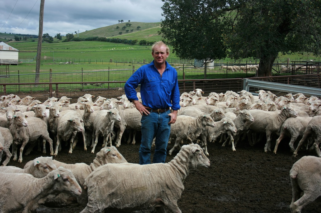 Chris Shannon grazes his ewes on lucerne to increase ovulation rates