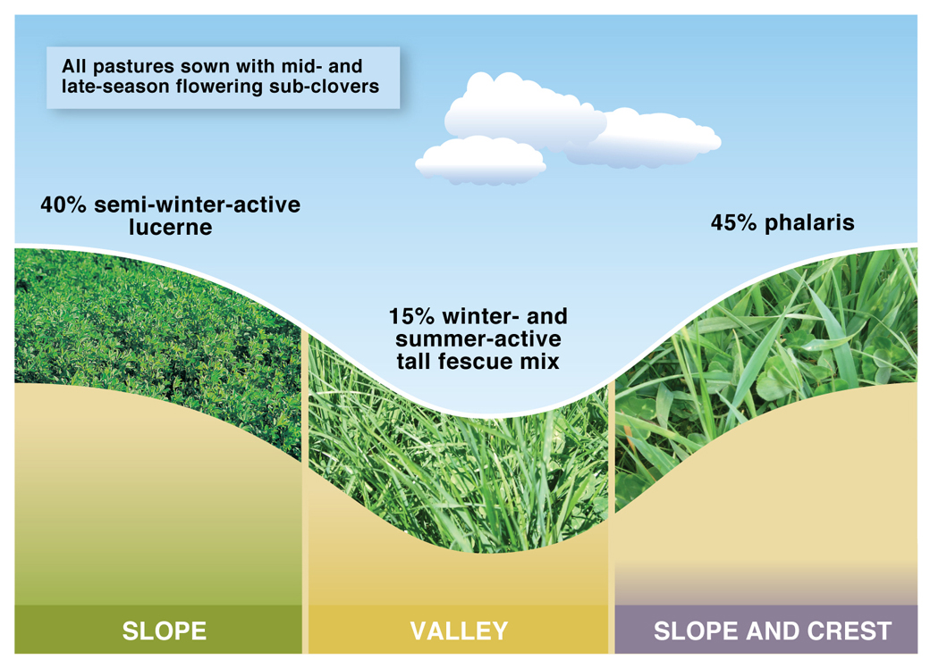 40% lucerne systems at the Wagga Wagga EverGraze Proof Site
