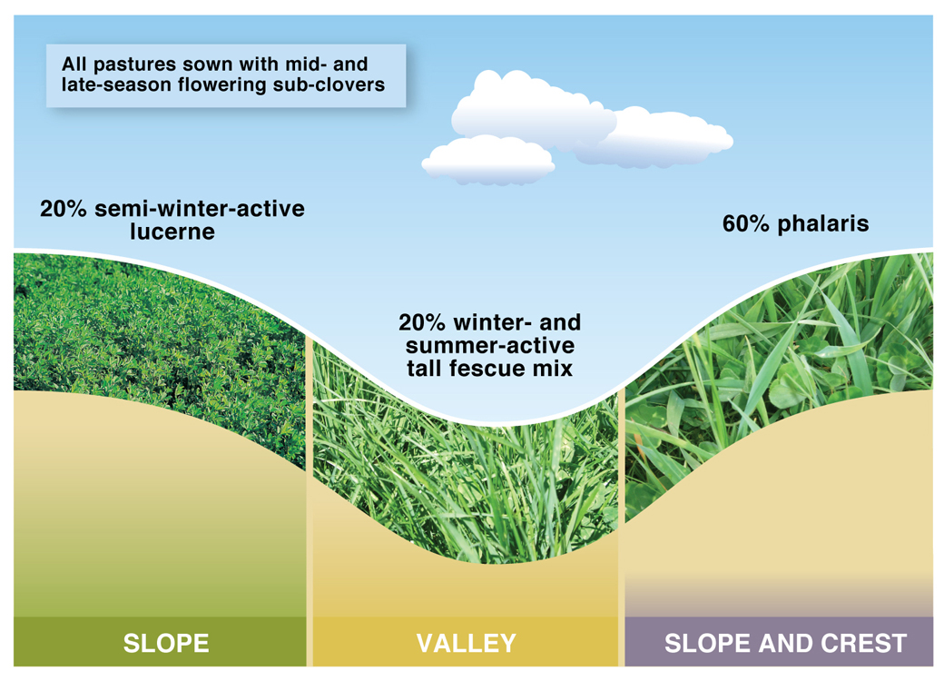 Figure 1. 20% lucerne pasture system at Wagga Wagga EverGraze Proof Site