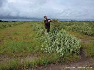 John Bowman, Agriculture Victoria, inspects saltbush at Rick Robertson's Bengworden Supporting Site