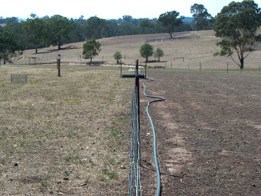 Ground cover was maintained in the rotational grazing treatments (left) but declined sharply in the annual dominant continuous grazed treatments (right) in the drought.