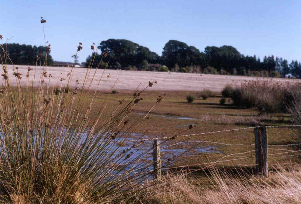 Low pasture production and spiny rush are typical of salt discharge areas in south-west Victoria.