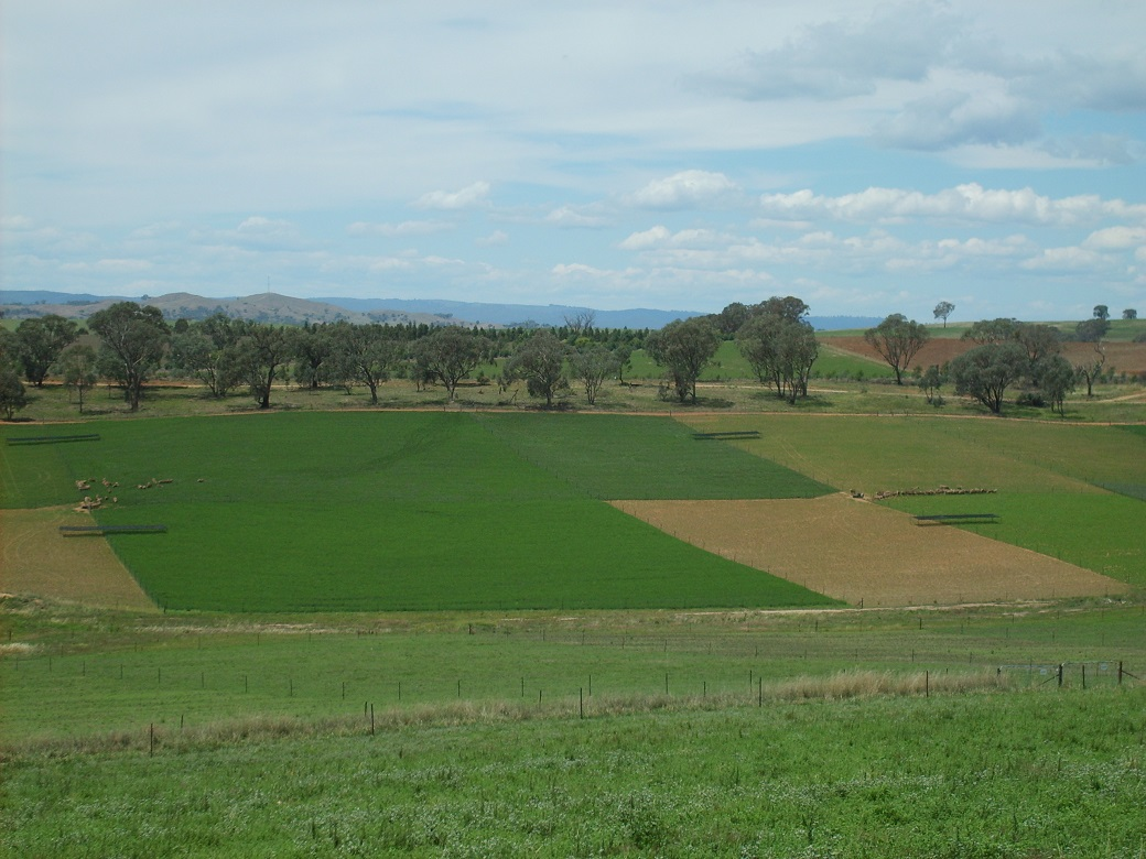 High 20% and 40% lucerne systems at the Wagga Wagga EverGraze Proof Site