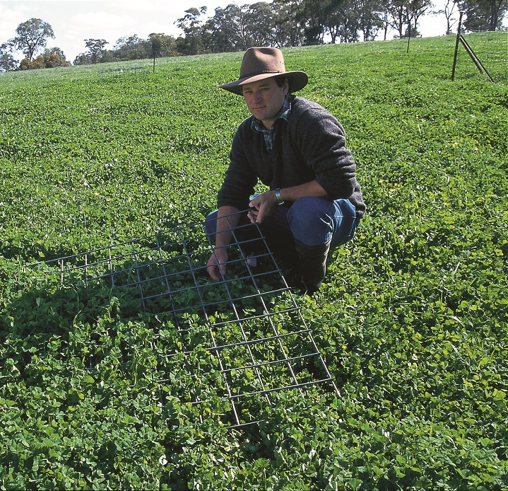 Phalaris basal cover declined in the continuous grazed treatment.