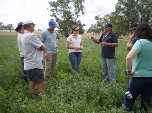 Rob Vearing with EverGraze team members discussing the value of including lucerne in his system for finishing lambs in good springs at Mooneys Gap.
