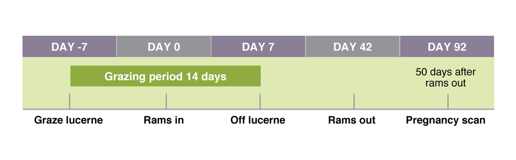 Figure 2. Time-line of events for flushing using lucerne or other green feed