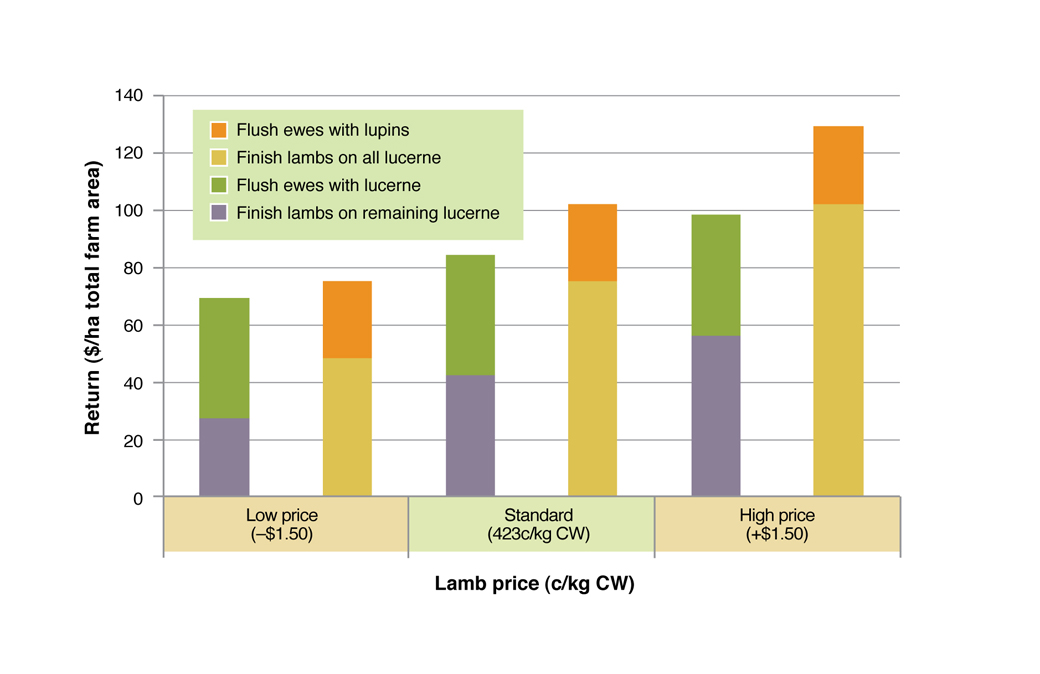 Figure 4. Comparison of returns from finishing lambs and flushing ewes on green feed under three price scenarios. See Table 2 for assumptions used in this analysis.