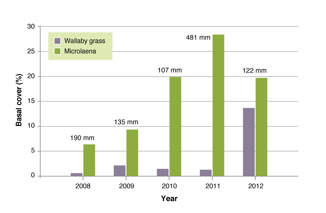 Figure 11. Basal cover (%) for weeping grass and wallaby grass, annually for the period of the Chiltern EverGraze Proof Site experiment. Figures above the bars represent summer (December, January and February) rainfall (mm).