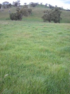 Orange Proof Site.  Landscape variability is a key feature of the Central Tablelands region.