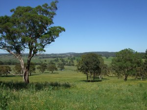 Naturalised pastures on the Northern Tablelands