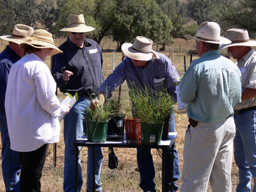Producers learning to identify native grasses at an EverGraze field day