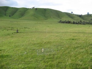 Fertilised Microlaena-based pastures at Murmungee Supporting Site carried on average 12 DSE/ha