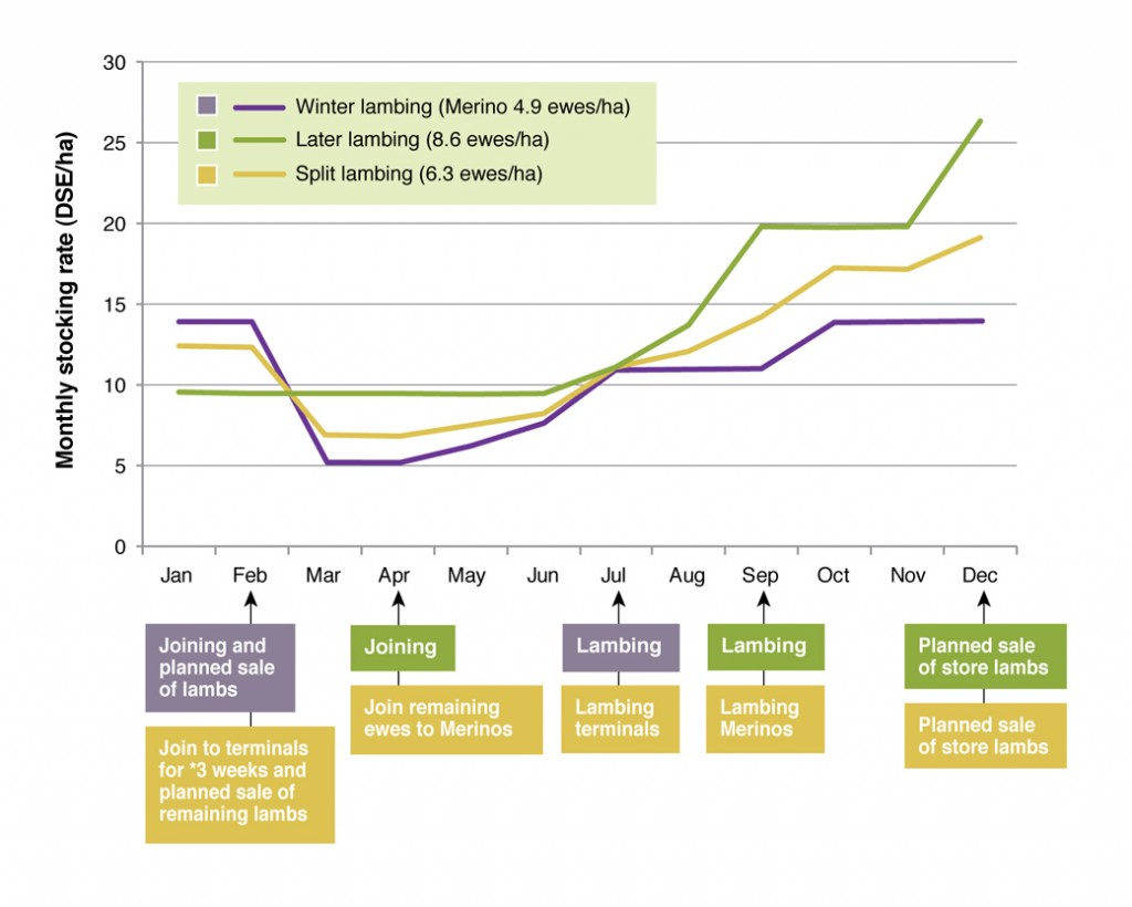 Figure 4. Approximate monthly stocking rates for ewe systems with different lambing times used at the Wagga proof site