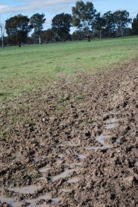 Pugged soils at the Euroa Grazing Demonstration