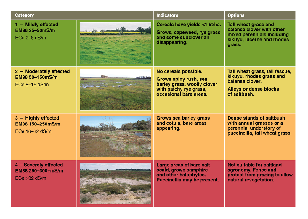 Soil salinity classes, indicator species and options