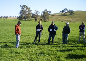 Phalaris was grazed in combination with lucerne pastures at Mooneys Gap EverGraze Supporting Site