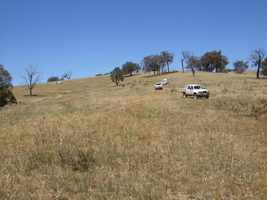 Native pastures at Holbrook, summer 2010