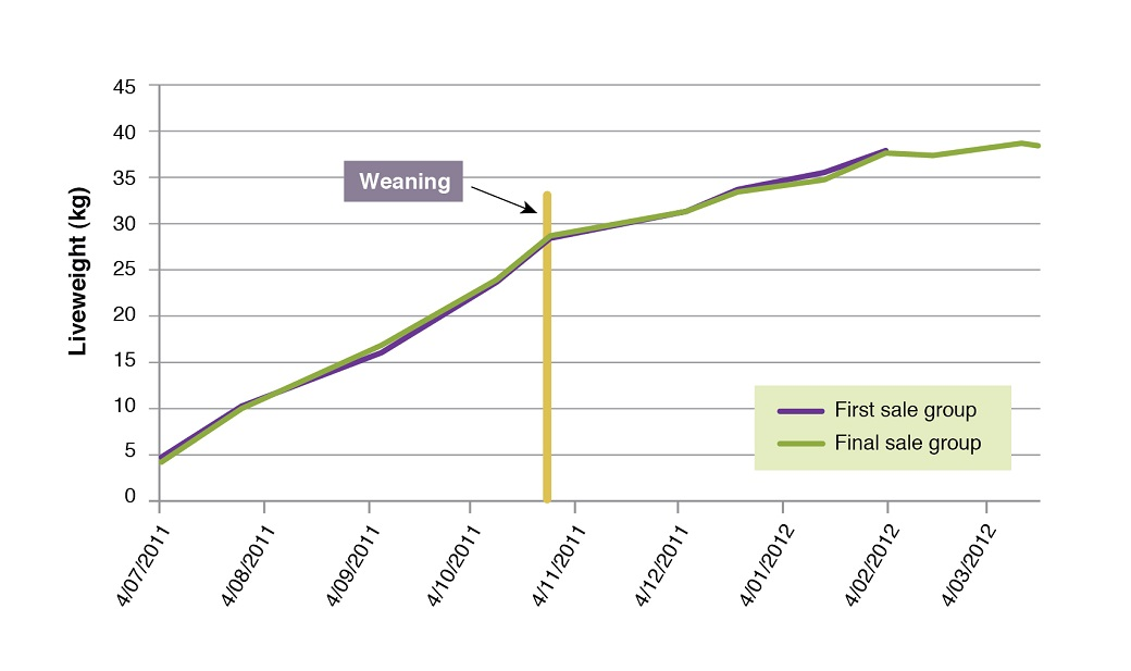 Lamb growth rates pre and post weaning on native dominant pastures at Chiltern in 2011