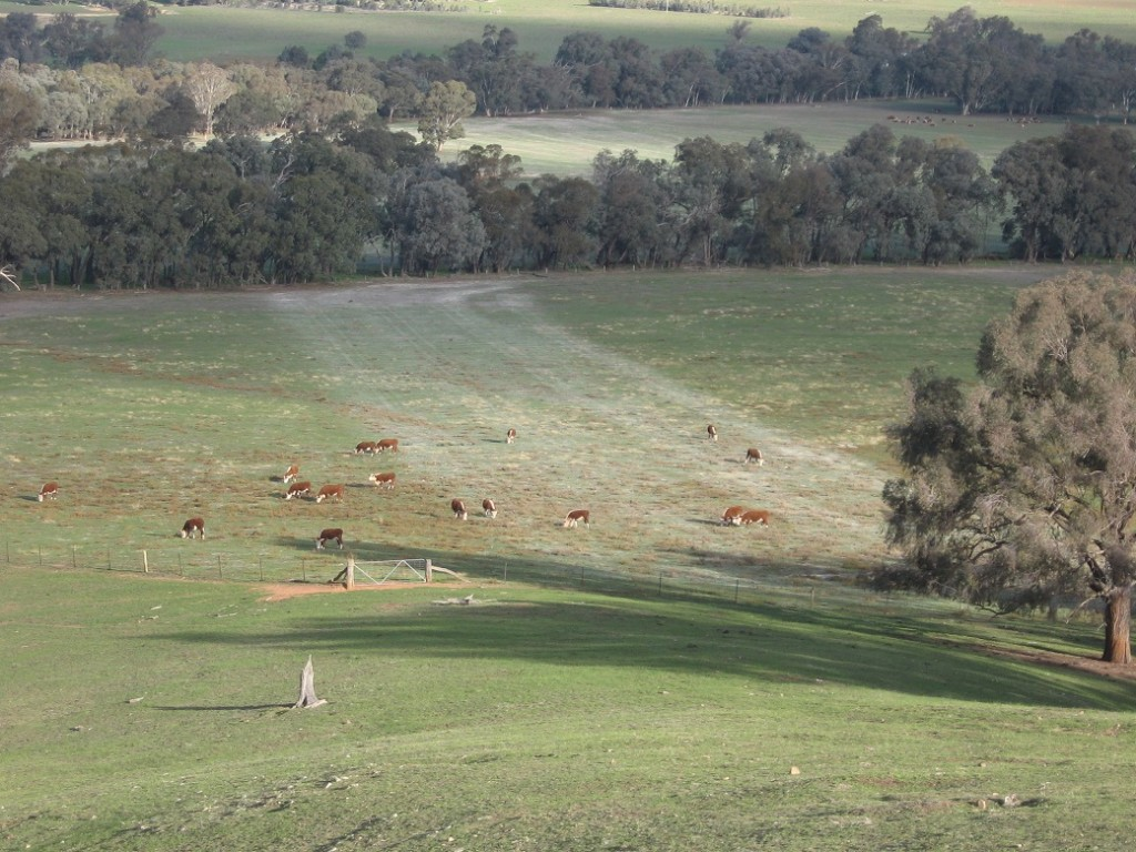 Lime was applied in a strip on the trial paddock in May 2008