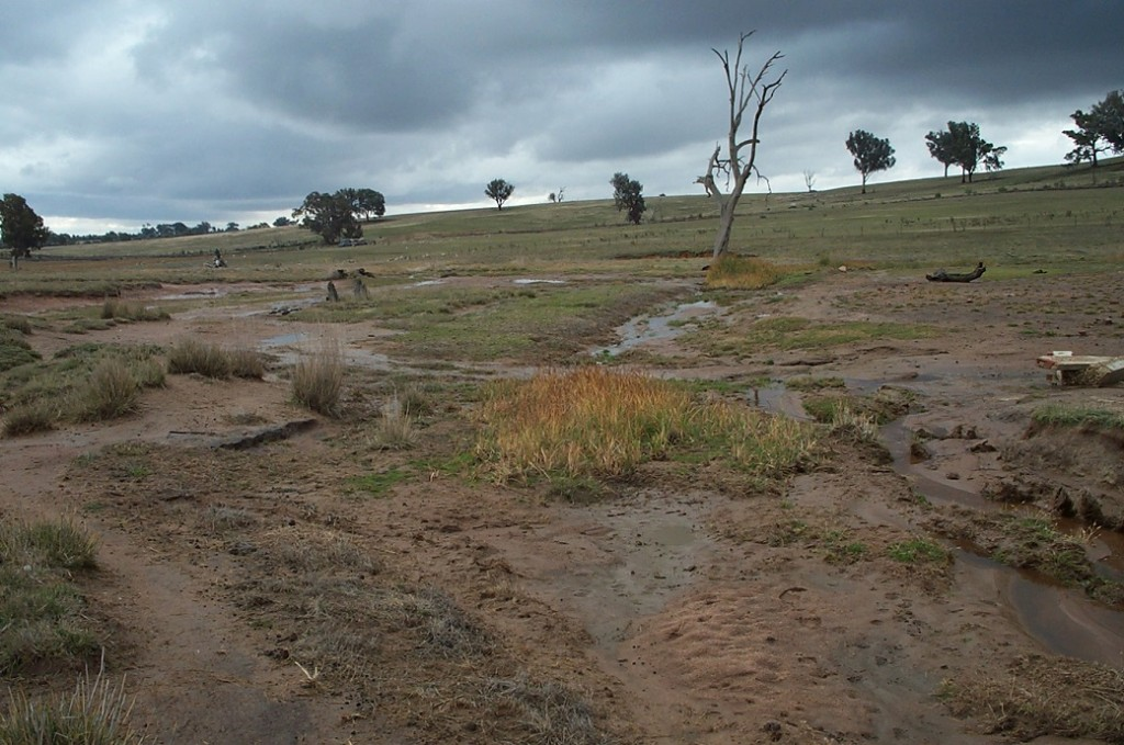 Pasture decline and soil erosion are typical of saline discharge sites in North East Victoria.