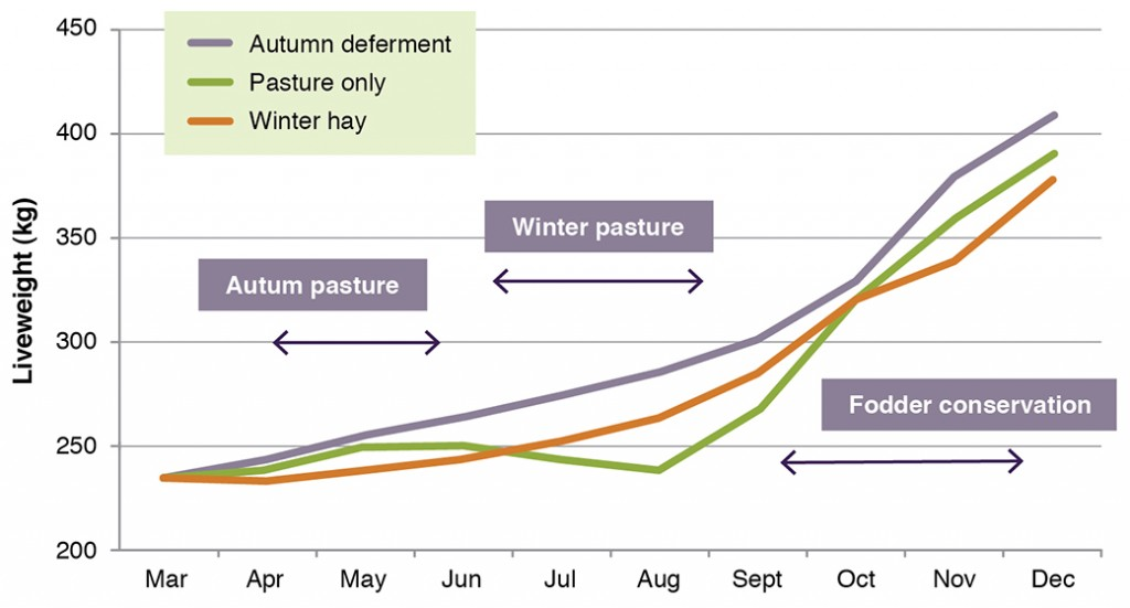 Figure 9. The effect of cutting 33% of the area in spring and feeding back in either autumn (deferment to allow pastures to get away) or in winter (when steers lost weight) on the final weight of weaner steers