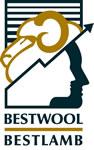 BestWool-Lamb