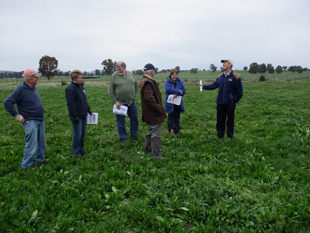 Members of the Euroa Grazing Group inspect chicory pastures which were successful in regenerating from seed at the Longwood site
