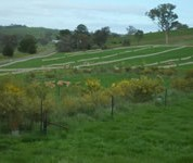 Shrub belts planted at the break of slope do not significantly reduce recharge or waterlogging. Lucerne is a more effective option where it can be planted.