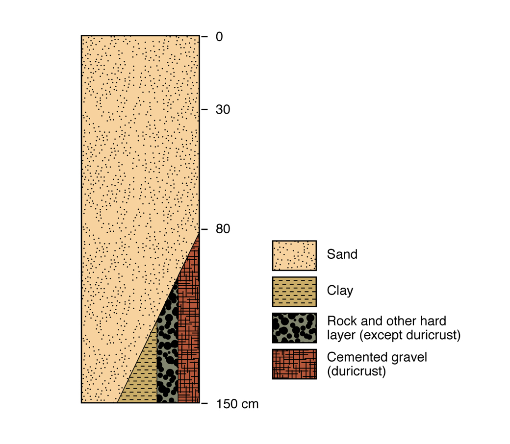 Figure 3. Pale deep sand