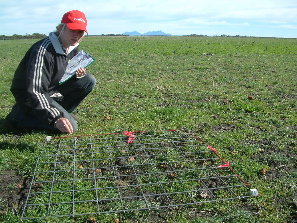 Elisha McCready measures basal cover using the 100 point grid